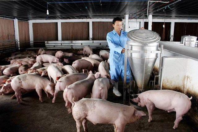 Vì sao thịt lợn 'rớt giá' kỷ lục?