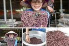 Cho lợn nghe nhạc, nuôi giun làm thực phẩm, người phụ nữ kiếm tiền tỷ mỗi năm