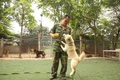 Hà Nội: Thu nhập 20-30 triệu đồng/tháng từ nghề huấn luyện chó