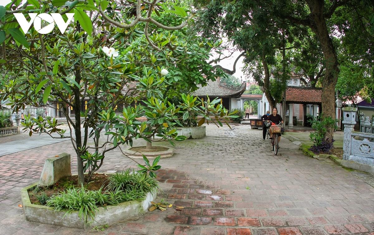 Vẻ đẹp của loài hoa sen đất trong ngôi chùa cổ 600 năm tuổi ở Hà Nội