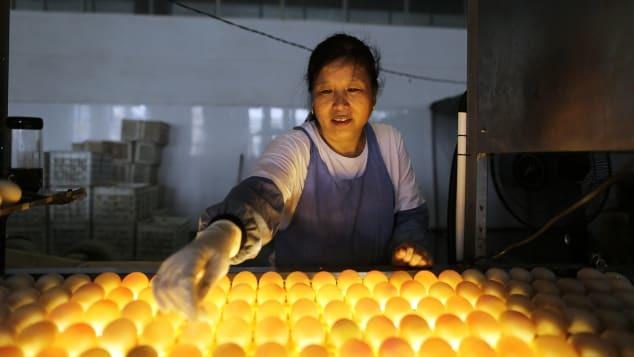 Nơi chuyên nuôi vịt đẻ trứng 2 lòng đỏ, thành món ăn trứ danh