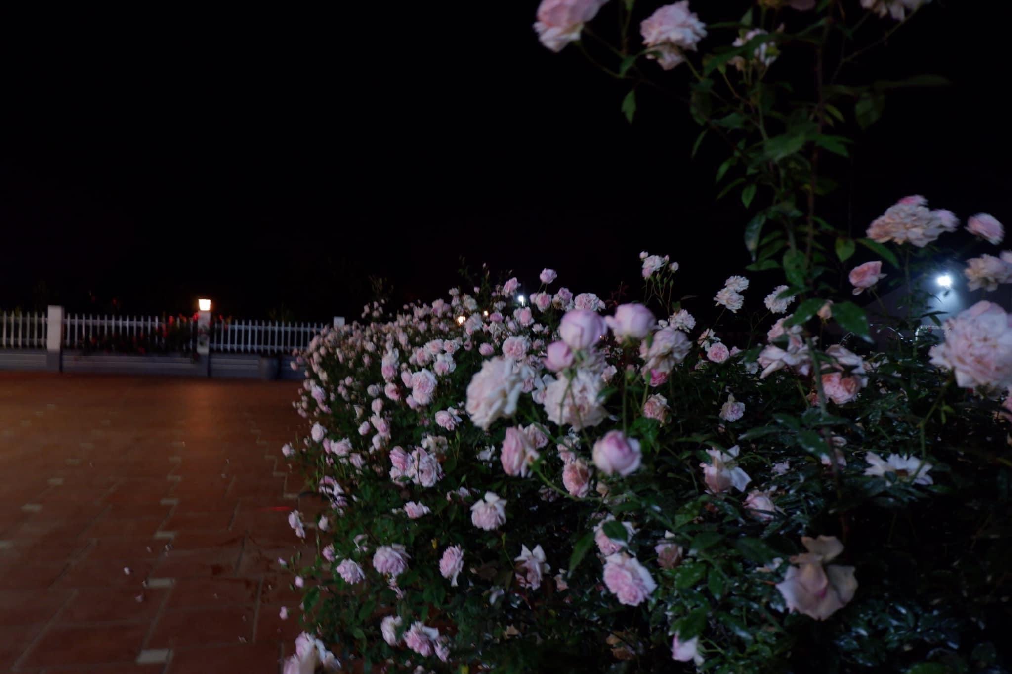 Biệt thự xây kiểu mái Thái độc đáo, ngập hoa trên mảnh đất rộng 10.000m2