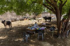 Không bác sĩ, bệnh nhân Covid-19 ở Ấn Độ tìm đến 'thần cây' chữa bệnh