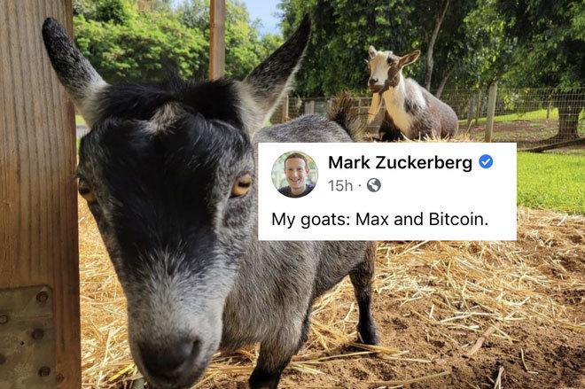 Nhiều nhà đầu tư tiền mã hóa tại Việt Nam lao đao vì Elon Musk