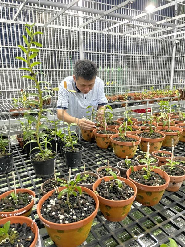 Công thức chăm lan rừng của ông chủ vườn 800m2 ở Bà Rịa - Vũng Tàu