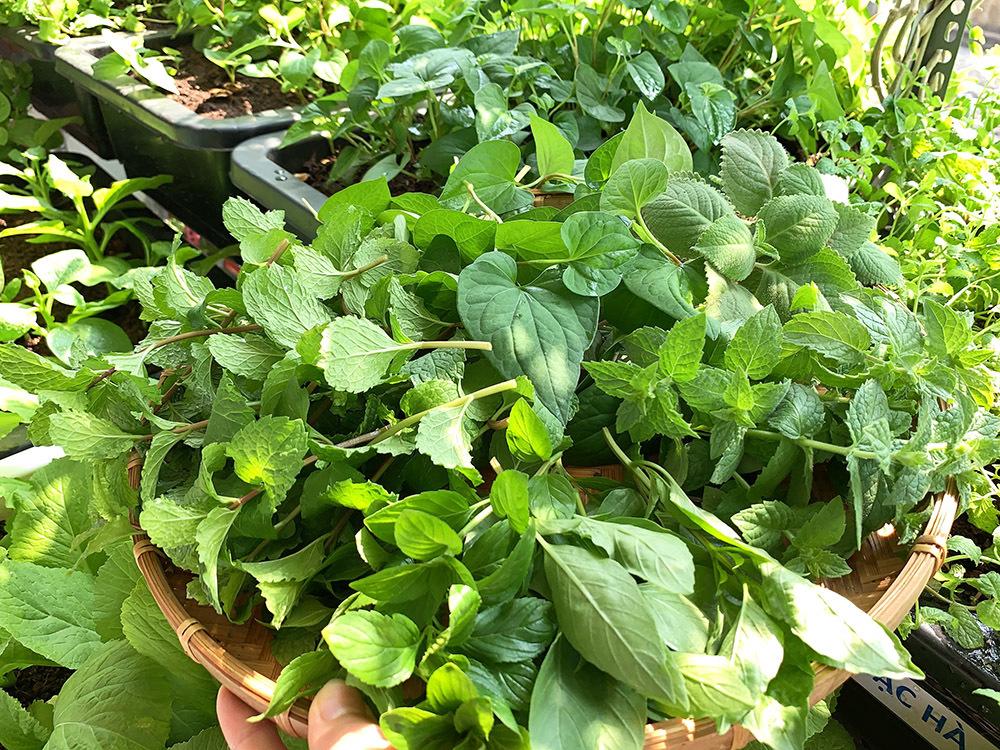 Vườn 3m2 ở ban công đủ các loại rau của nam kỹ sư