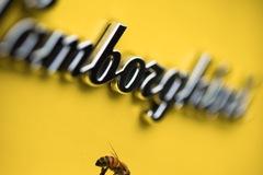 Giải mã bí ẩn về những tổ ong trong nhà máy Lamborghini