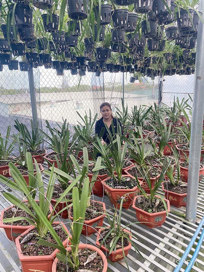 Cô giáo trẻ 'Nam tiến' để gây dựng vườn lan 2.000m2