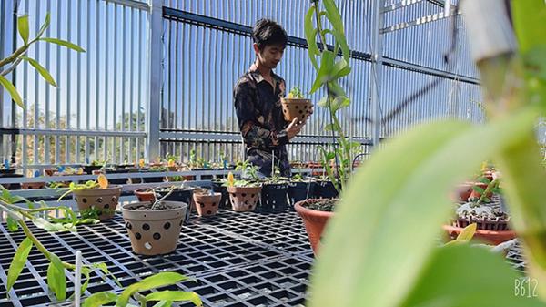 Ông chủ 8X sở hữu vườn lan nghìn chậu ở Gia Lai