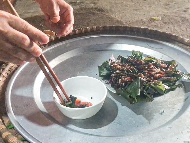 Lạ lùng món 'tôm bò trên cây' của người xứ Lạng