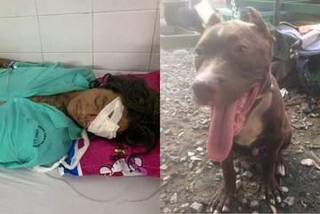 Vụ chó Pitbull nặng gần 60kg cắn chết người: Chủ nuôi từng đi cai nghiện hơn 10 lần, vẫn chưa xác định được danh tính nạn nhân