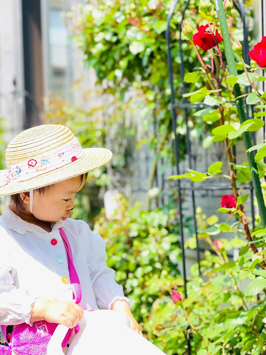 Vườn hồng ở hàng rào tuyệt đẹp của vợ chồng Việt tại Nhật