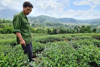 Former maize fields turn out to be worth millions