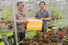 Ông chủ vườn lan Ngọc Vương chia sẻ bí quyết chăm lan đúng cách