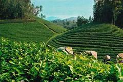 Thực hiện đồng bộ, hiệu quả cơ cấu lại ngành nông nghiệp theo 3 nhóm trục sản phẩm chủ lực