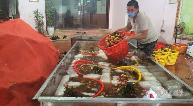 Vải chín đỏ đường ở Bắc Giang
