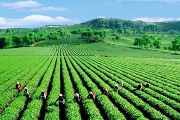 Ngành nông nghiệp tập trung chuyển đổi mô hình tăng trưởng