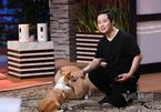 Chàng trai Việt tạo camera tương tác thú cưng giữa lòng nước Mỹ