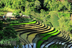 Y Ty rice terraces in pouring-water season