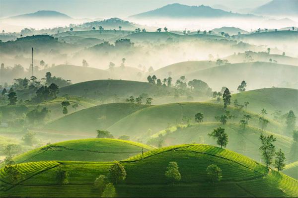 Vietnam's photography