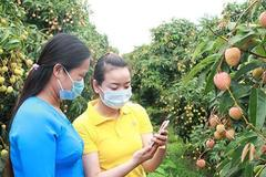Selling farm produce online: e-commerce sites compete to attract farmers