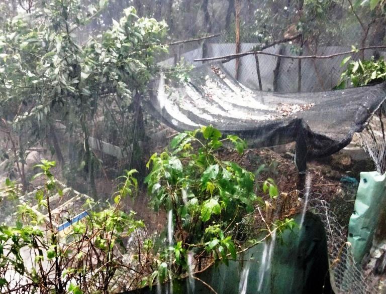 Mưa đá kéo dài 2 tiếng ở Nam Trà My, vùi lấp nhiều vườn sâm tiền tỷ