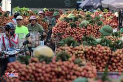 Giao chỉ tiêu: Mỗi Cục Quản lý thị trường mua 1 tấn vải thiều Bắc Giang