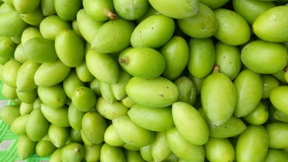 Trám non đầu mùa 50 nghìn/kg, mua về muối ăn dè mùa dịch