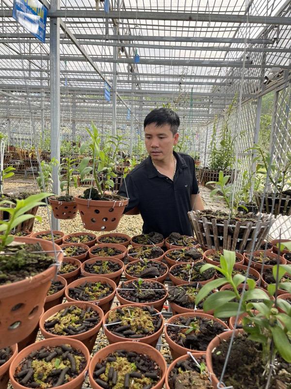 Chủ vườn lan Tam Đảo chia sẻ bí quyết cho người bắt đầu chơi lan