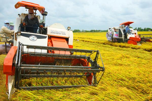 Tái cơ cấu nông nghiệp - bước chuyển mạnh mẽ ở Sóc Trăng
