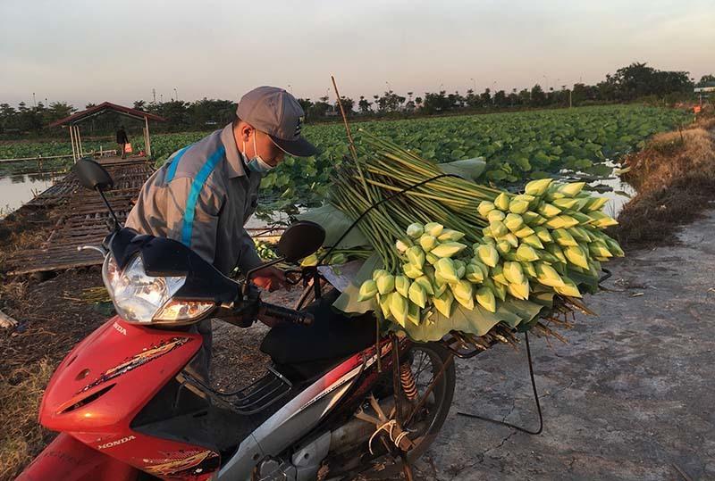 Kỷ lục triệu bông hoa sen của anh nông dân Hà Nội