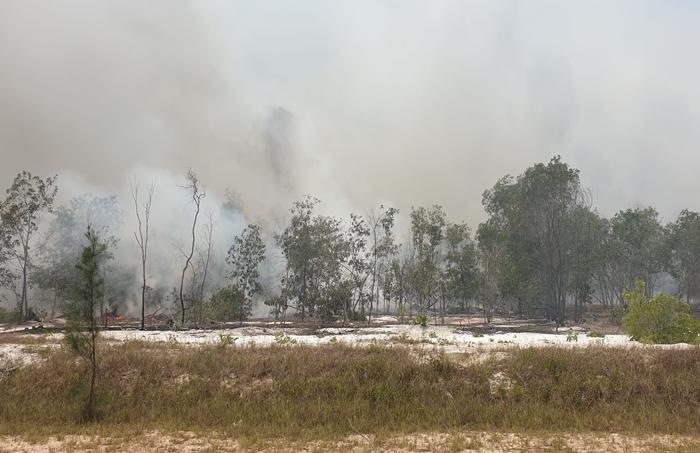 Rừng phòng hộ ven biển cháy dữ dội, hơn 100 người dập lửa