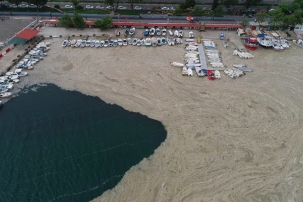 'Chất nhầy' bí ẩn bao phủ bờ biển Istanbul