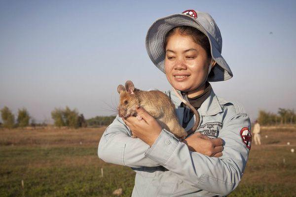 Chân dung 'người hùng' rà phá bom mìn ở Campuchia