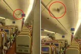 Máy bay hạ cánh khẩn cấp vì lý do không ngờ