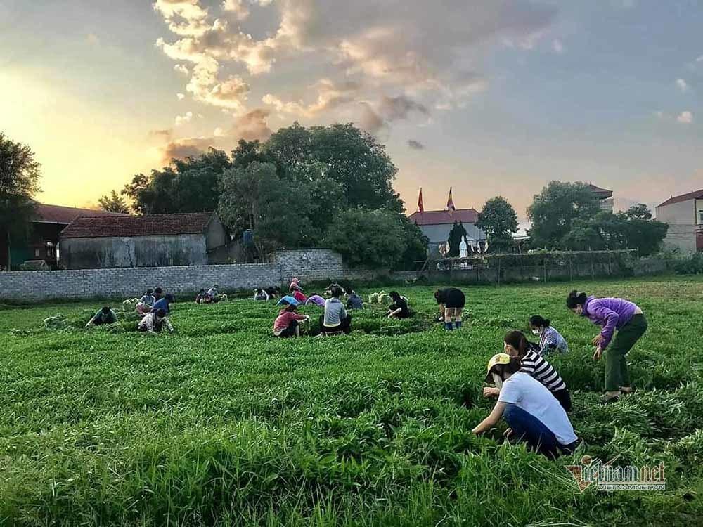 """""""Biệt đội"""" rau xanh tiếp tế khu cách ly của vợ chồng giáo viên Bắc Giang"""