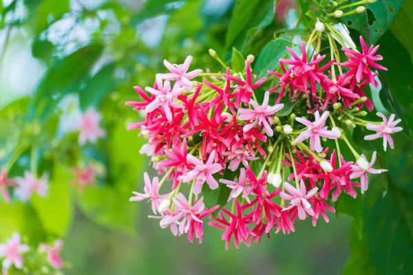 Những loại cây dễ trồng cho ban công chống nắng nóng đổ lửa ngày hè