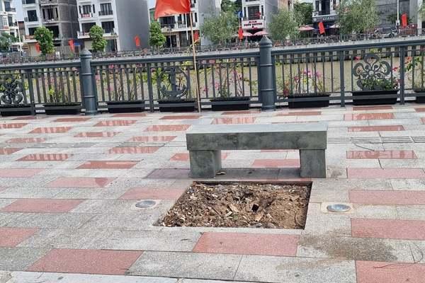 Mối xông khiến hàng loạt cây xanh chết khô trên phố Hải Phòng