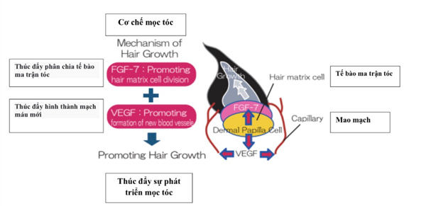 'Trợ thủ' chăm sóc tóc gãy rụng chuyên biệt cho nam và nữ