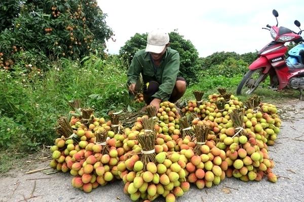 Tháo gỡ khó khăn do Covid-19: Đồng bộ nhiều giải pháp để tránh đứt gãy chuỗi cung ứng nông sản