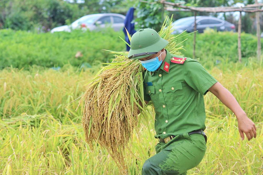 Hình ảnh ngày mùa trên cánh đồng nơi giãn cách ở Bắc Giang