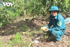 Hàng trăm tấn xoài ở Đắk Nông phải đổ bỏ, xả làm phân bón vì 'bí' đầu ra