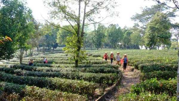 Đại đô thị Felicia City - 'lá phổi xanh' tỉnh Bình Phước