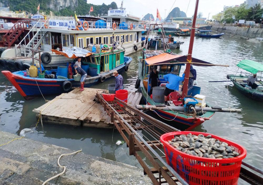 Hải sản Vân Đồn rớt giá thấp nhất từ trước tới nay