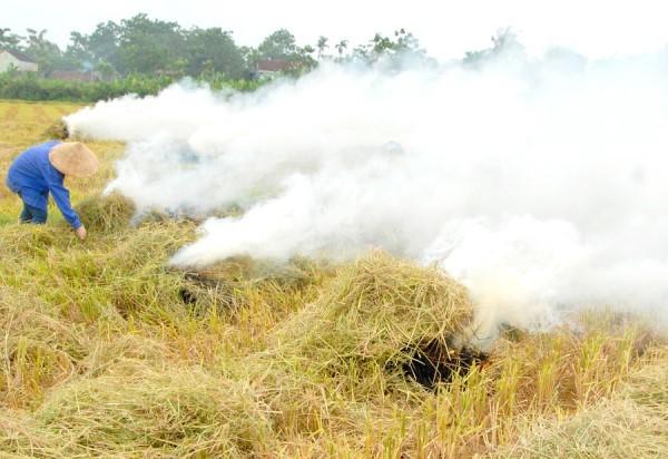 Lo dân đốt rơm rạ gây ô nhiễm không khí, Bộ TN&MT ra văn bản chỉ đạo