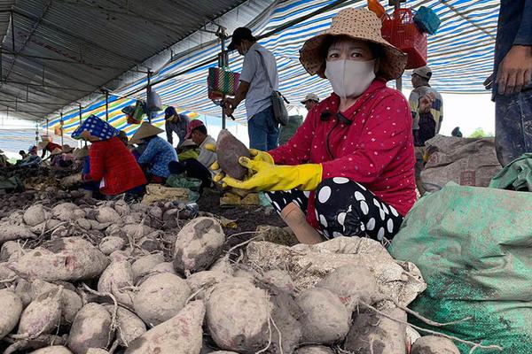 Gần 6.000 tấn rau củ, trái cây, thuỷ sản cần tiêu thụ mỗi ngày