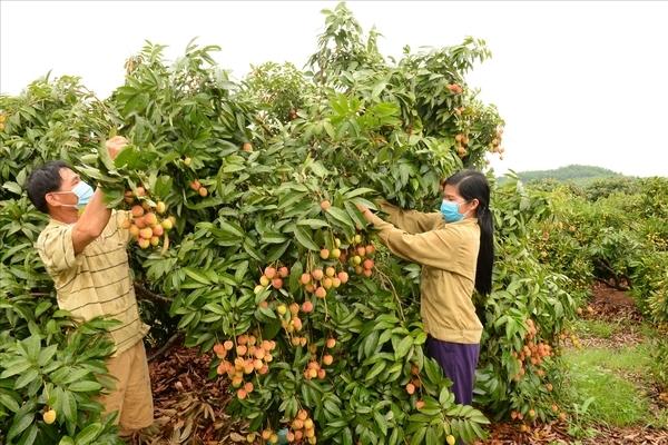Mô hình điểm chuẩn hóa để hỗ trợ tiêu thụ nông sản lâu dài