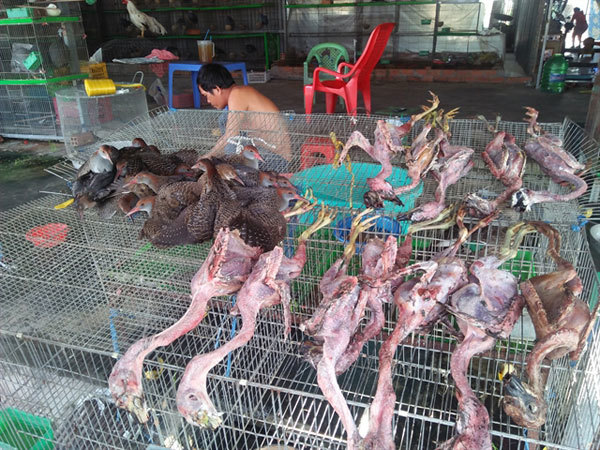 Wildlife conservation NGOs call for end to wild birds trade