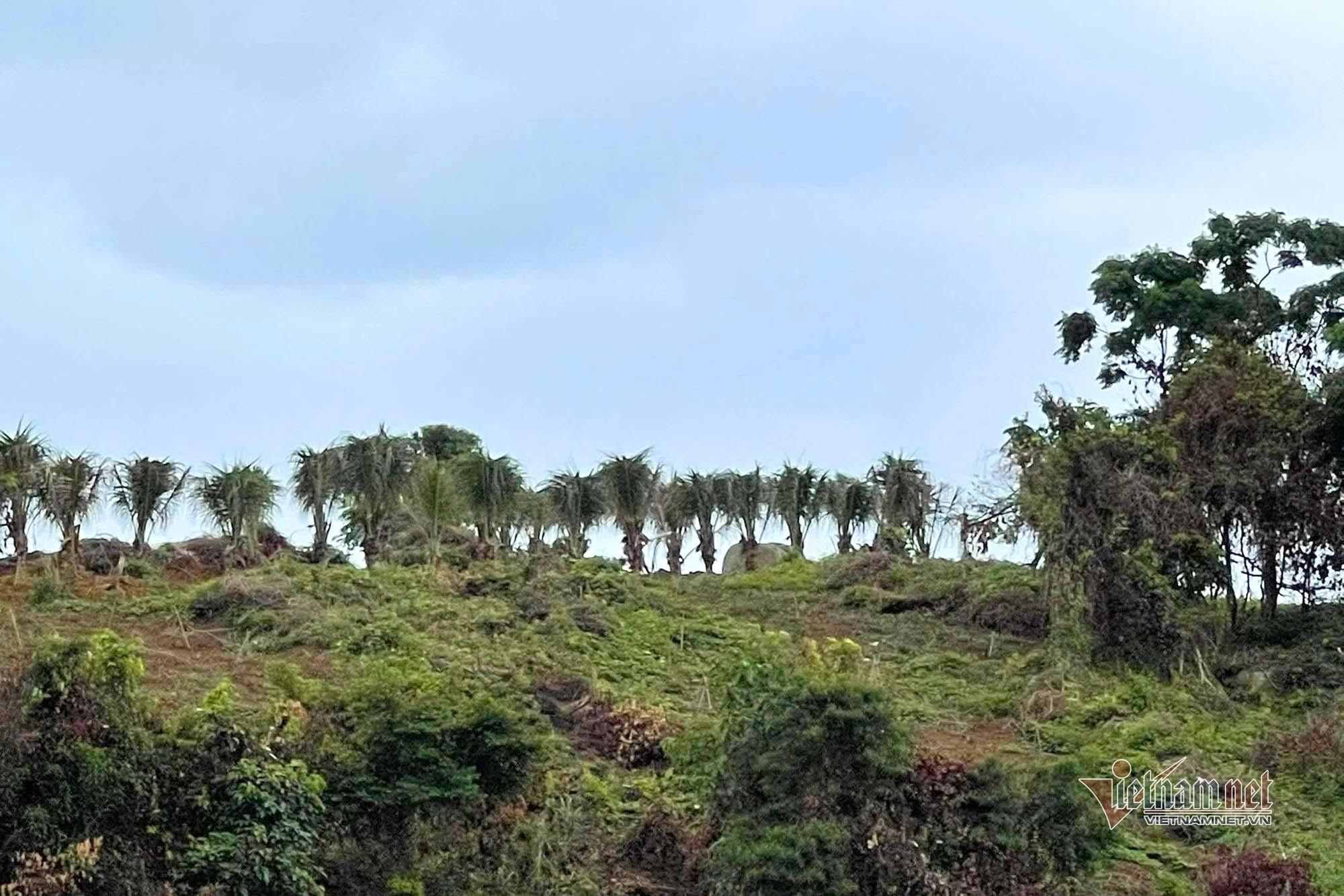 Đảo nguyên sinh ở biên giới Quảng Ninh bị cạo trọc