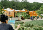 Gia đình 10 người rời TP.HCM lên Đà Lạt, thuê đồi trọc mở trang trại
